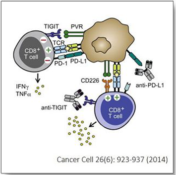 CancerCell
